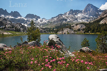 Wildflowers at Ediza Lake