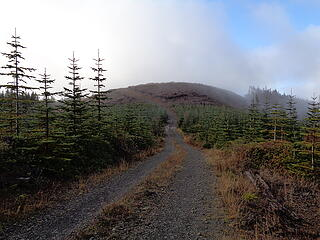 Recently clearcut Larch Mtn.
