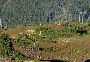find the elk