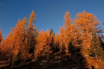 Deepest gold larches, hiking back to camp