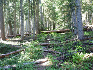 Trail Past Cascade Creek