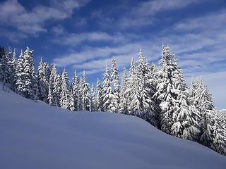 snowy trees w/ sunny skies