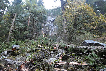 Rocks fell from the cliff above taking out trees below. Photo by Bill Davis.