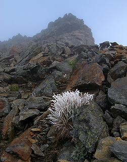Ghost grass approaching summit