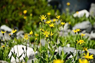 Abundant wildflowers were on display.