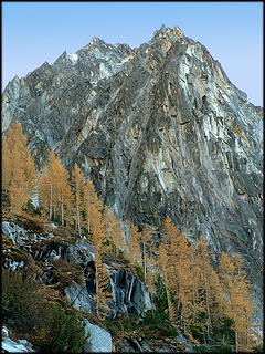 Dragontail Larches 10.12.06.