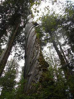 cedar grove trail 051419 04