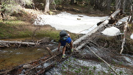 Josh crossing a log across Swamp Creek so we could get to the easier south side