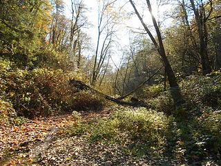 Swan Creek Park 102719 09
