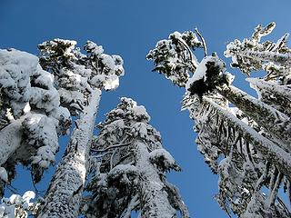 Snow-plastered Giants