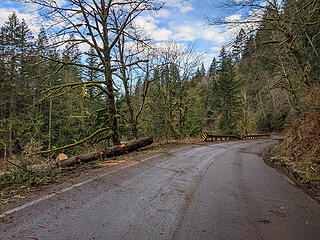 More trees down at the start of the Island Drop guard rail. King County took out the trees that fell along the paved part of the road.