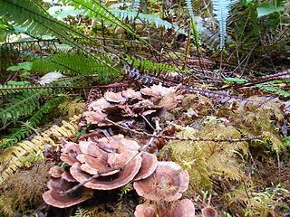 Cedar Grove Trail 082219 04