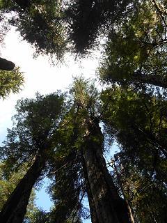 Cedar Grove Trail 082219 02