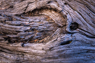 Cottonwood Detail (1 of 1)