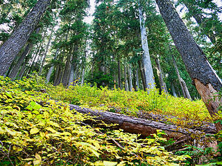 Fall understory