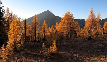 Deep gold larches in front of Pyramid along the way