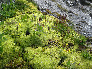 lots of green mosses near the water