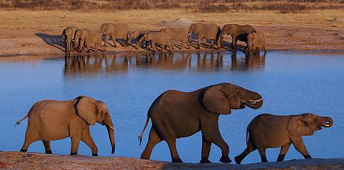 Hwange National Park, Zimbabwe By Gil Aegerter