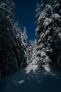 Moonlit Corridor