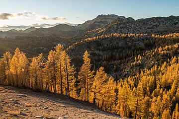 late afternoon sun lighting up larches on all ridges