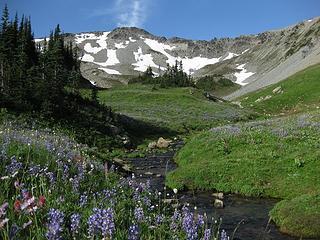 Huckleberry Creek Trail, Mount Rainier National Park