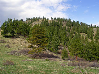 """High point along the large N shoulder of Twin Peaks aka """"Horse Lake Mountain"""""""