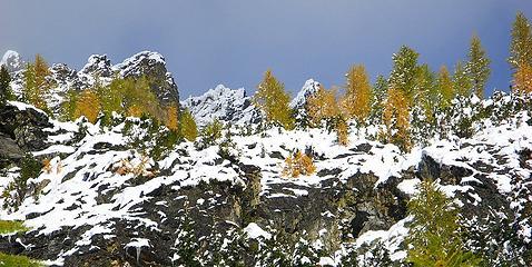 Ridge of Green & Gold, Black & White