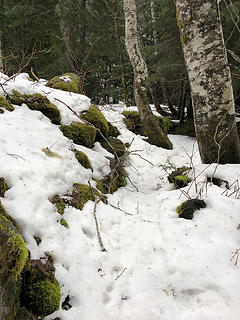 The new Kelley Creek Trail 1/25/19
