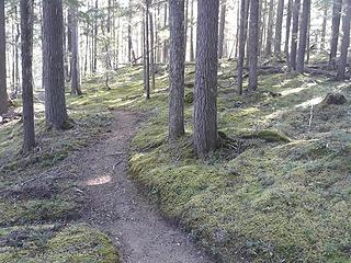 My first uphill the next morning, to the Junction area, and the forest floor is all moss for miles