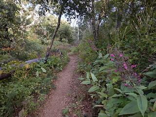 flowery pass