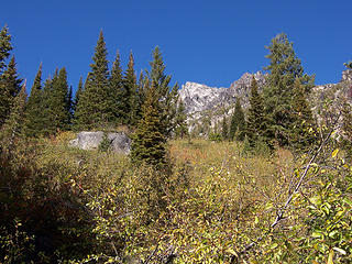 Mt. Stuart summit from brush N of  Ingalls Creek trail.