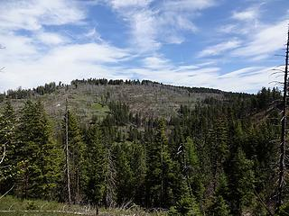 Summit area of Craig Mtn.