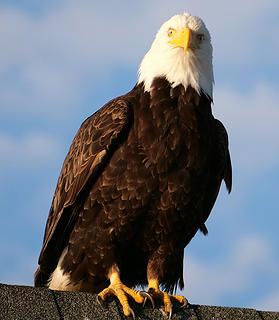 Eagle Details (cropped)