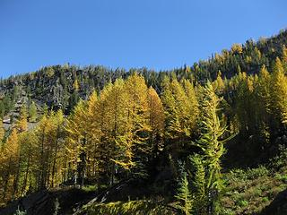 And did I mention...larches
