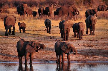 Watering hole in Hwange National Park, Zimbabwe