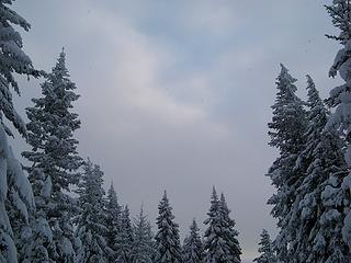 Snowflakes in the air