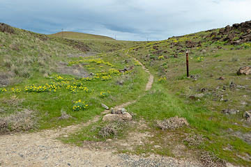 Trailhead with beautiful flowers