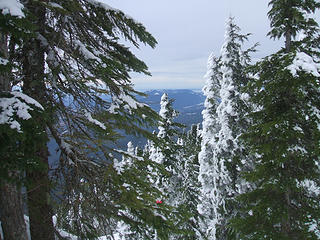 Rime ice on the trees