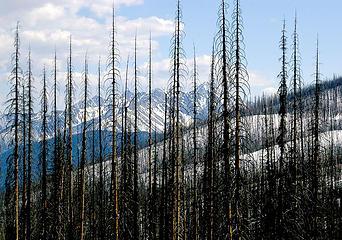 Driveway Butte Needles fire3