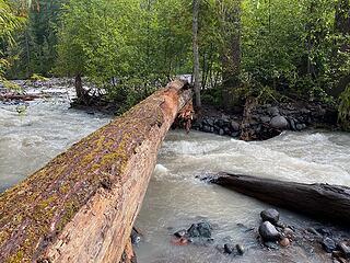 South Fork Mowich River Big Log