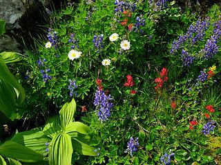 Flowers on the garden ledge