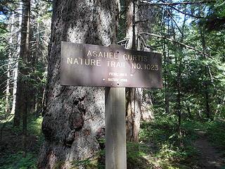 Asahel Curtis Nature Trail No. 1023 082819 01