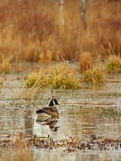 8- Wetlands