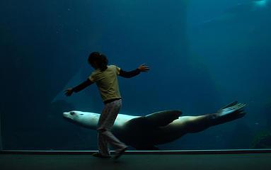 Aquarium in Seward, Alaska.