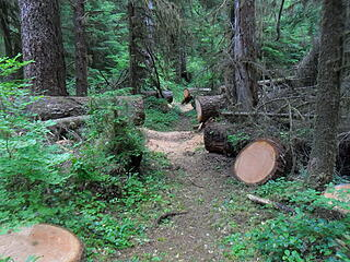 Recent blowdown [url=https://www.wta.org/go-hiking/trip-reports/trip_report-2020-07-06-4978104447]cut by trail crew (WTA?)[/url], there were several places that were recently worked like this.  I really, really appreciated this, especially compared to later trail sections further up.