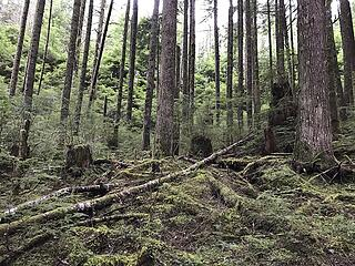 thick forest, nothing resembling a trail or boot path