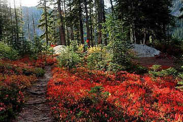 brilliant colors near camp