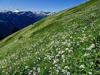 Huge wildflower field below camp