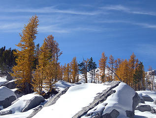 Larches in the Enchantment Basin