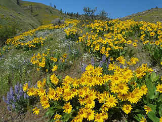 Sage Hills flowers